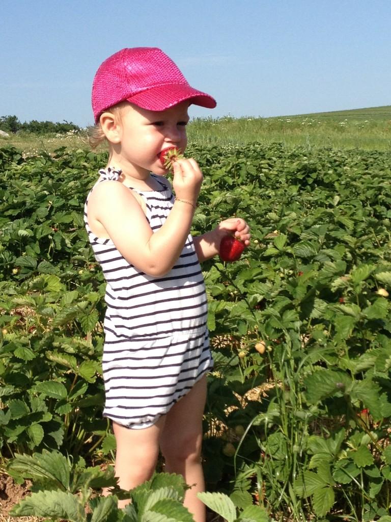 Erdbeeren I