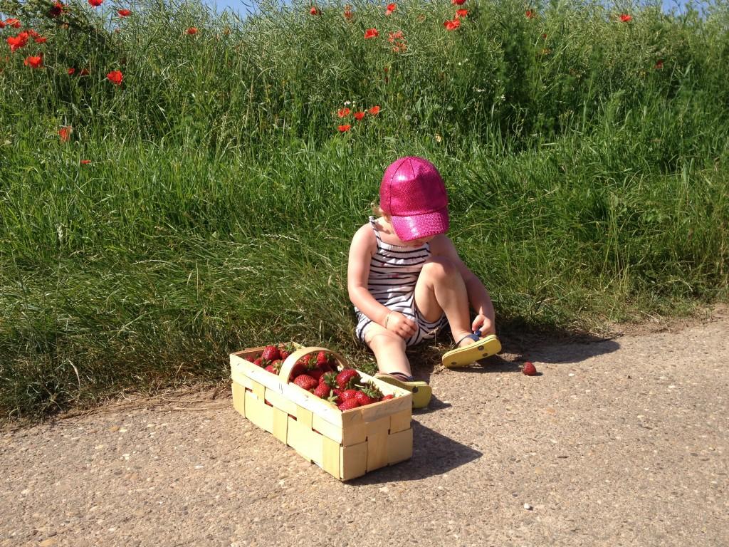 Erdbeeren III